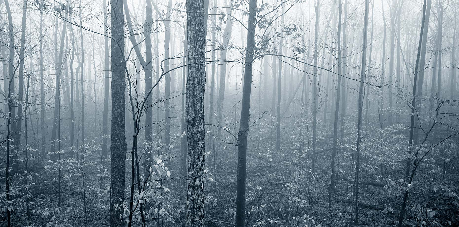 trees-in-fog.jpg